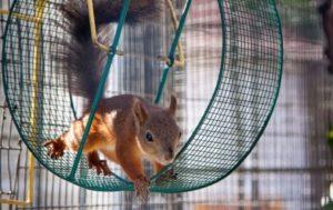 roue ecureuil